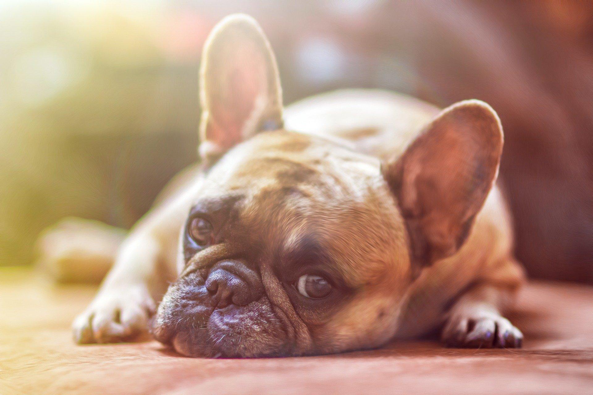 Investujte do psa s průkazem původu!