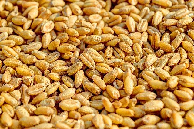 vytlučená pšenice